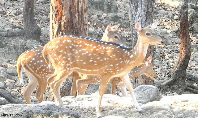 Malsi Deer Park in ddn